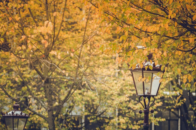 lamp and leaves