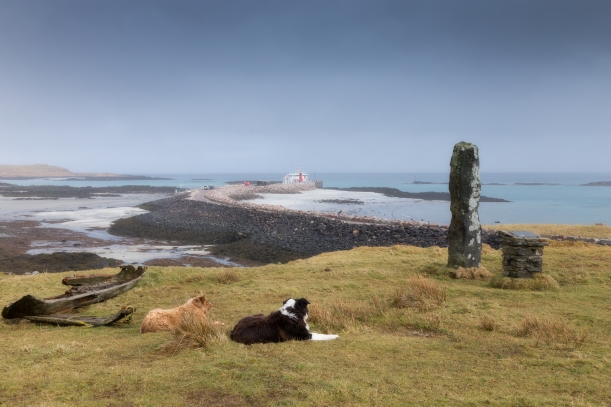Eigg's guard dogs